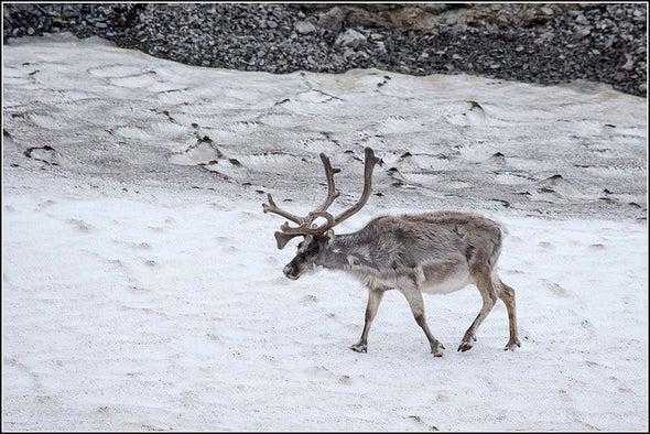 Fast-Warming Arctic Proves Deadly to Animals and People
