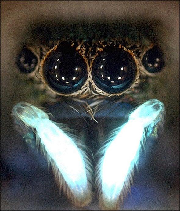 Ultraviolet Spider Mating