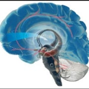 The Violent Brain