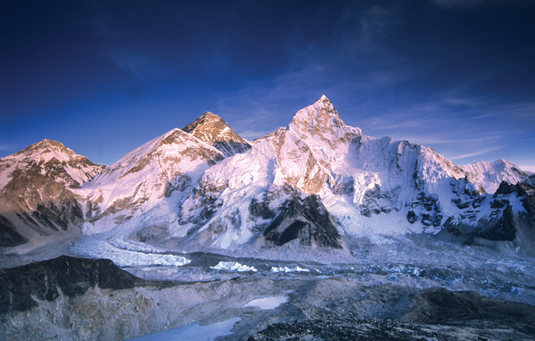Plants That Lived on Mount Everest Rediscovered in Forgotten Lab Collection
