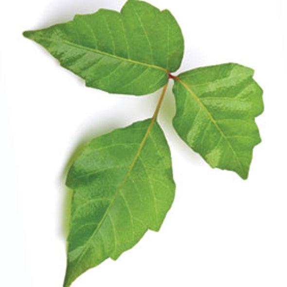 Patent Watch: Fluorescence Detection of Poison Oak Oil