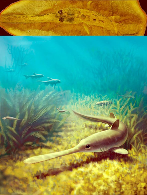 Extinct Freshwater Sharks That Spawned in Saltwater Had Been Mistaken for Separate Species