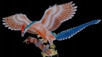 Chinese Fossil Shows Early Bird Supped on Seeds
