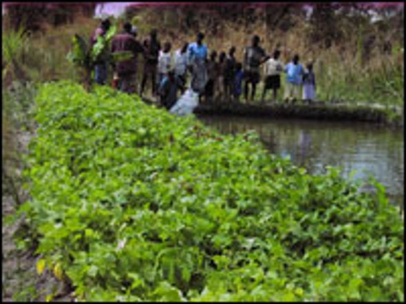 Feeding the Hungry and Sick: Fish Farming Boosts Nutrition in Rural Malawi