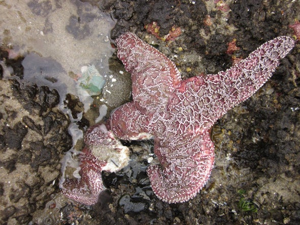 Sea Stars Are Wasting Away