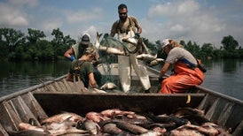 Navigating a Sea of Superlatives in Pursuit of the Asian Carp