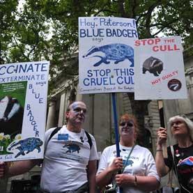 badger protest
