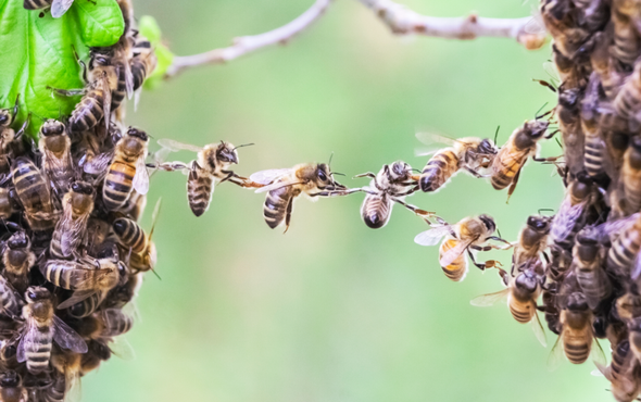The Elusive Calculus of Insect Altruism