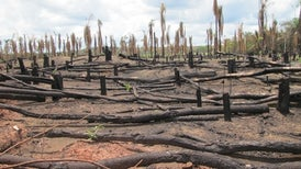 Brazil Greenhouse Gas Emission Spike Blamed on Deforestation