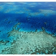 Bleaching Hits 93 Percent of the Great Barrier Reef