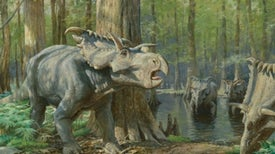 Excavations Reveal a Surprising Mix of Dinosaurs from Lost Continent
