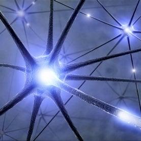 neurons signal