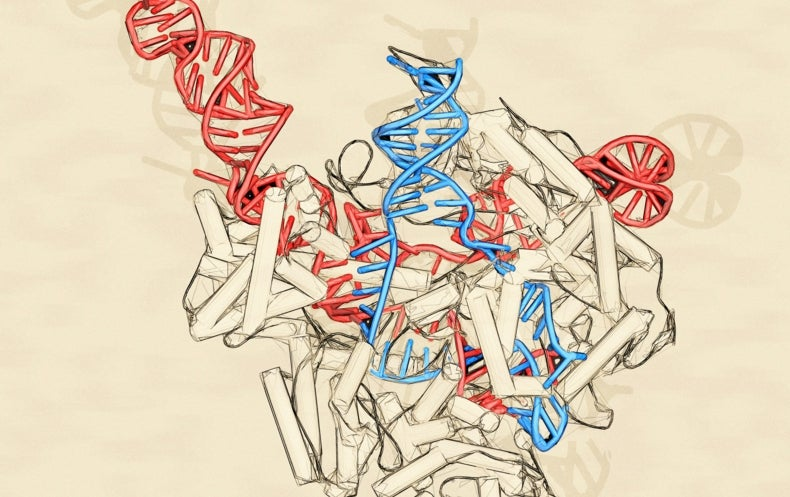 Taking Gene-Editing to the Next Level