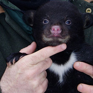 10 Lessons Medicine Can Learn from Bears