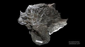 Well-Preserved Armored Fossil Reveals Cretaceous Camouflage