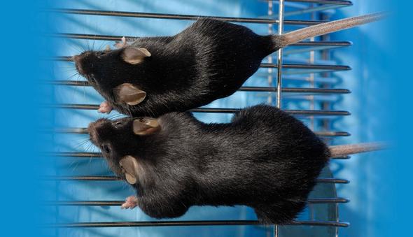 Molecular Medicine Keeps Mice Mighty in Microgravity