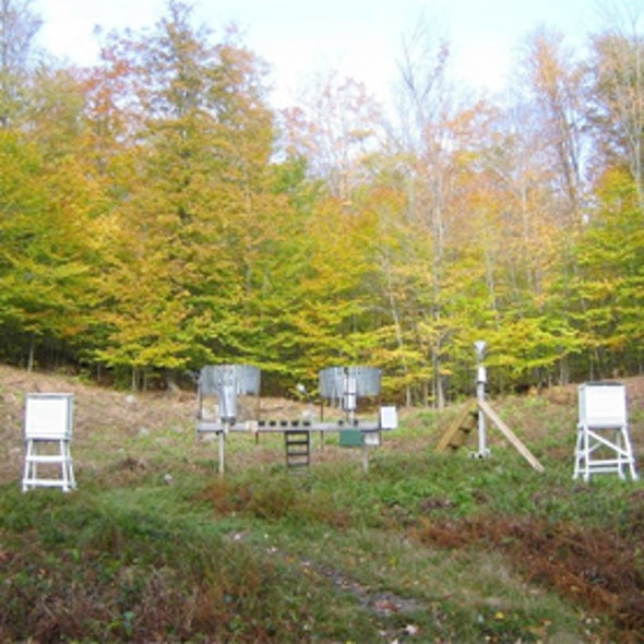 Wired Forest May Reveal How New England Forests Respond to Climate Change
