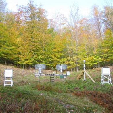 Wired Forest May Reveal How New England Forests Respond to Climate ...