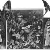 Butterfly Farmer, 1914: