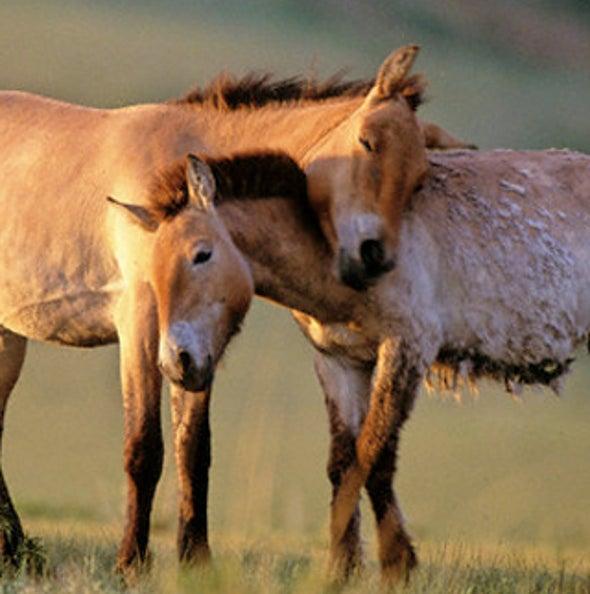 News Bytes of the Week--Przewalski's Prize: Vets Reverse Vasectomy on Endangered Horse