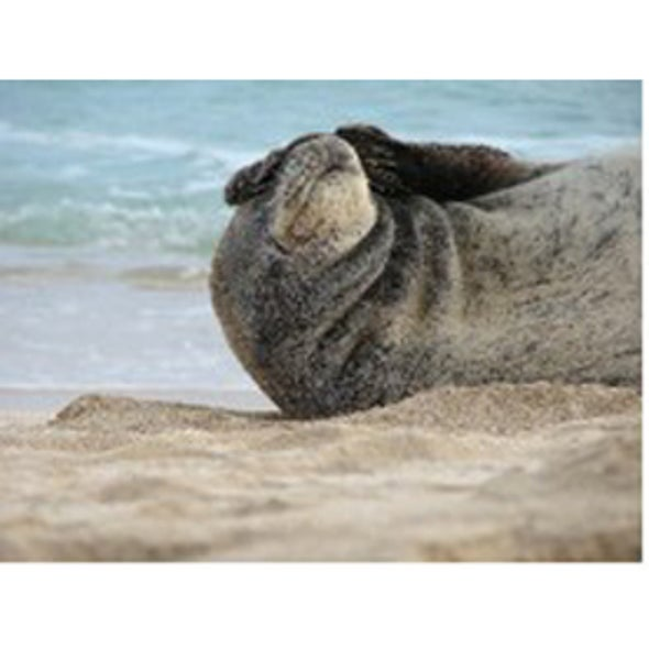 Cat Disease Threatens Endangered Monk Seals