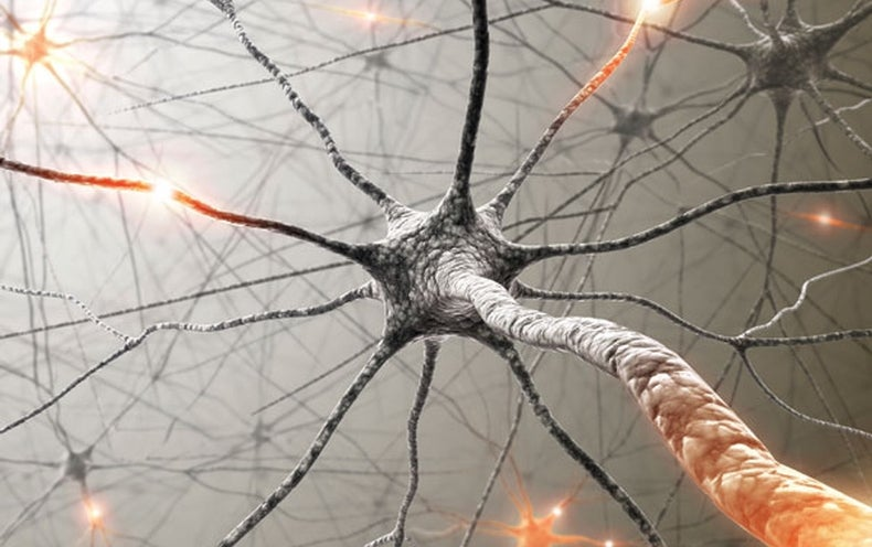 Memories May Not Live in Neurons' Synapses - Scientific American