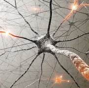 Memories May Not Live in Neurons' Synapses