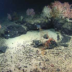 Life Found Deep inside Earth's Oceanic Crust