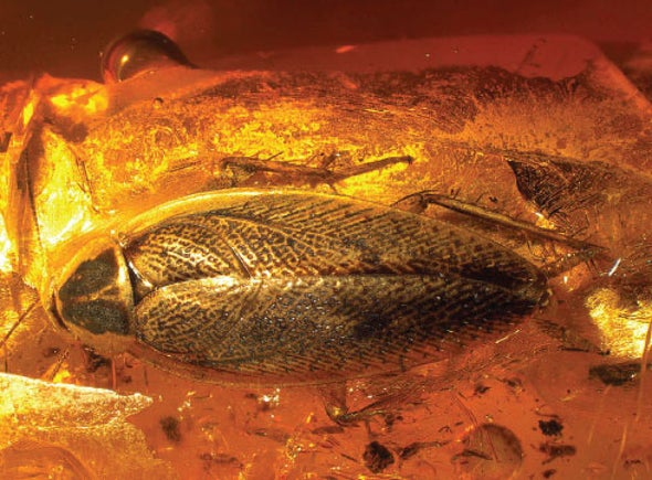 """""""Invasive"""" Cockroach Species Lived in the U.S. 49 Million Years Ago"""