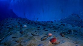 Seawater Plus Calcium Could Cut Carbon, Aid Sea Life