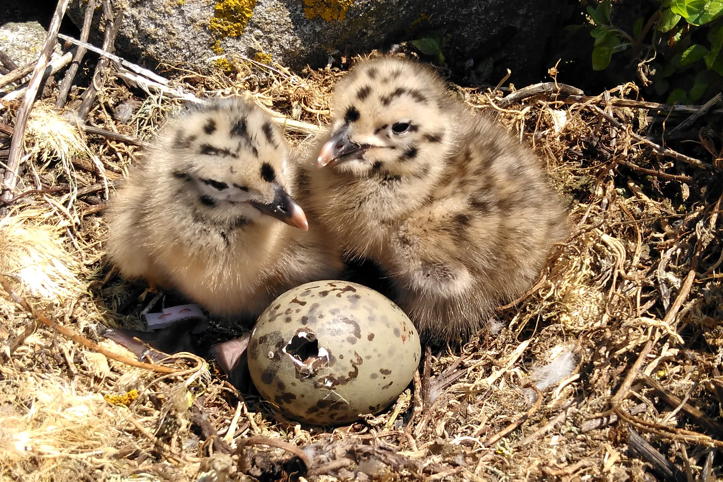 Development of the Avian Embryo: A Behavioural and Physiological Study