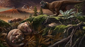 Now Hear This: New Fossils Reveal Early Ear-Bone Evolution