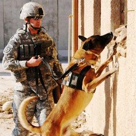 bomb-sniffing-dog