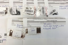 Weird Mystery Seeds Arriving by Mail Sprout Biodiversity Concerns