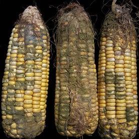 U.S. Drought 2012: Pick Your Poison
