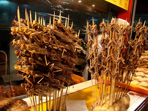 It's Time to Eat Insects