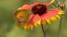 """Restoration Economy"" Strives to Protect Pollinators, Create Jobs"