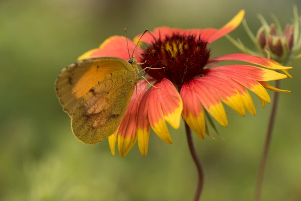 """Restoration Economy"" Strives to Protect Pollinators, Create Jobs"
