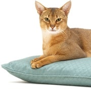 Scratch 'n Sniff: A Guide to Cats and Dogs