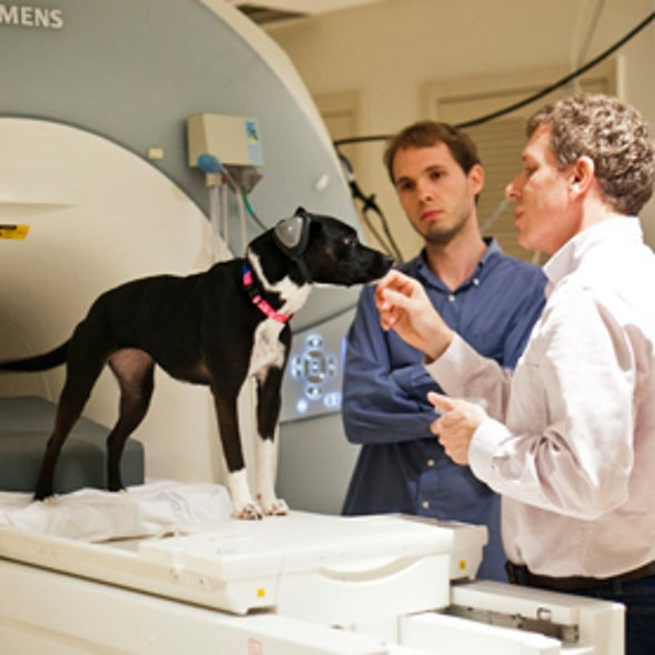 Brain Scans Reveal Dogs' Thoughts