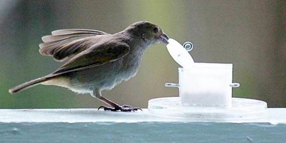 City Birds Outwit Country Counterparts
