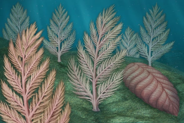Exploring the Mysterious Life of One of Earth's First Giant Organisms