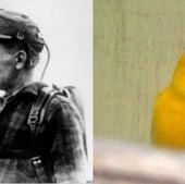 Bird Patrol