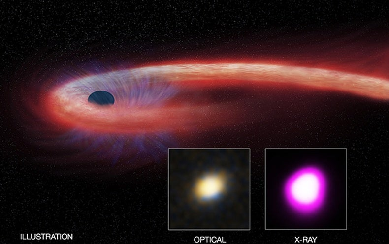 Black Hole Binges on Record-Setting Stellar Meal