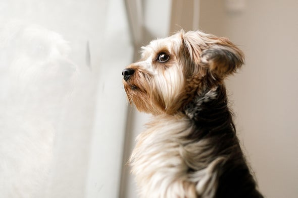 How to Help Your Dog Adapt to a Postpandemic World