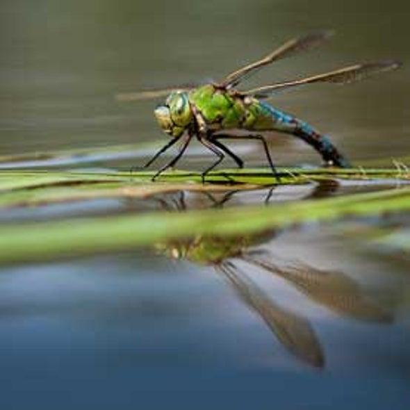 Pesticides Spark Broad Biodiversity Loss