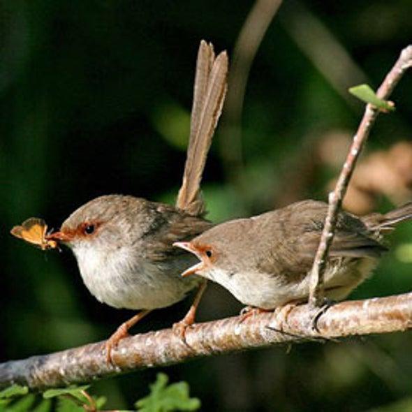 Wrens Teach Eggs to Sing