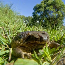 How Toads Conquered the World [Slide Show]