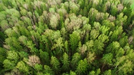 Tree Farms Will Not Save Us from Global Warming
