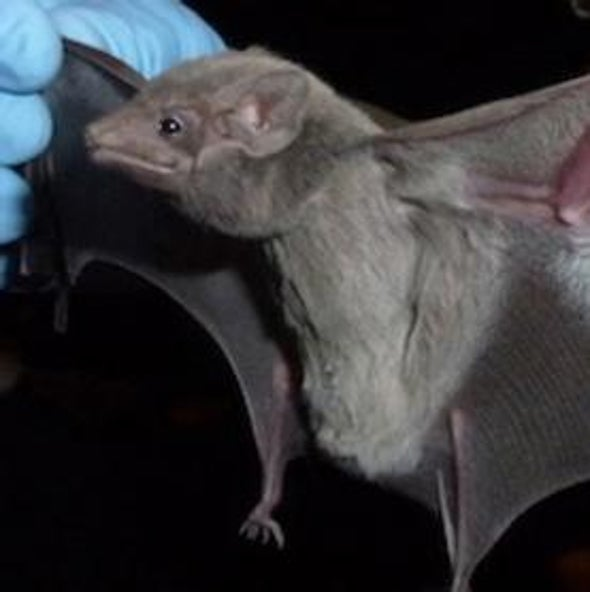 Deadly Coronavirus Found in Bats